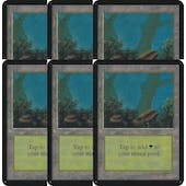 Magic the Gathering Alpha Basics LOT 6x Forest (blue) - MODERATE PLAY (MP)